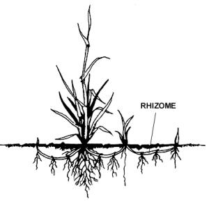 rhizome_example